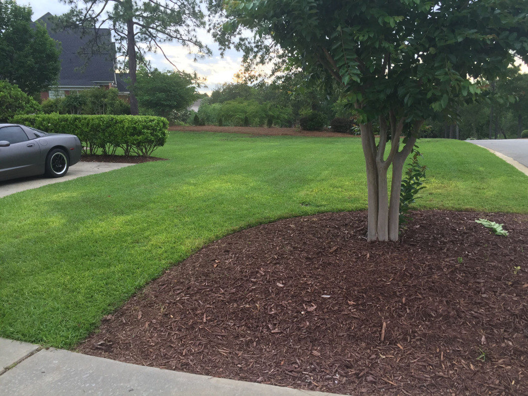 Keep Your Lawn in Excellent Condition Throughout the Year